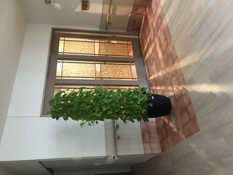 介護施設様に観葉植物レンタル