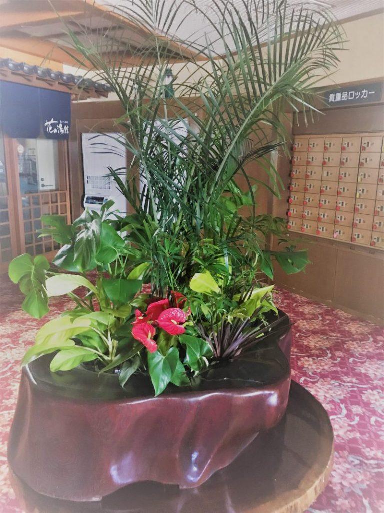 寄せ鉢の観葉植物レンタル