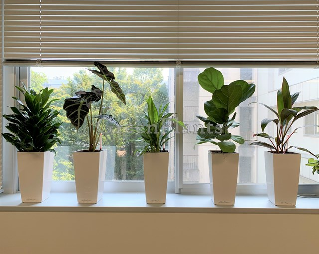 観葉植物レンタル 小鉢