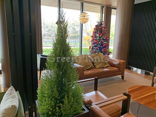 クリスマスツリーとゴールドクレスト