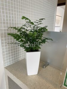 観葉植物小鉢