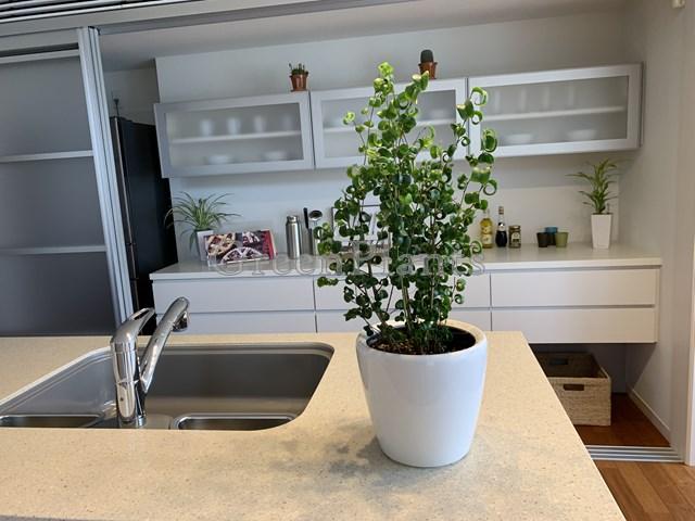 観葉植物小鉢レンタル