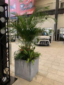 観葉植物mix2