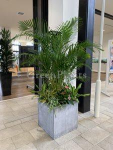 観葉植物mix1