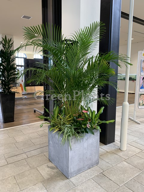 観葉植物のmixレンタル