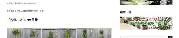 観葉植物の在庫一覧